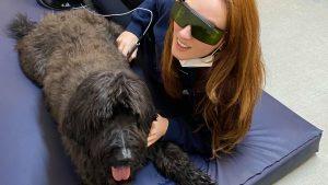 Drum Business Park - Newfoundland dog