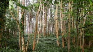 Woodland grants for Durham land managers
