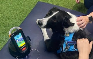 Tech-savvy animal rehab centre upscales patient experience
